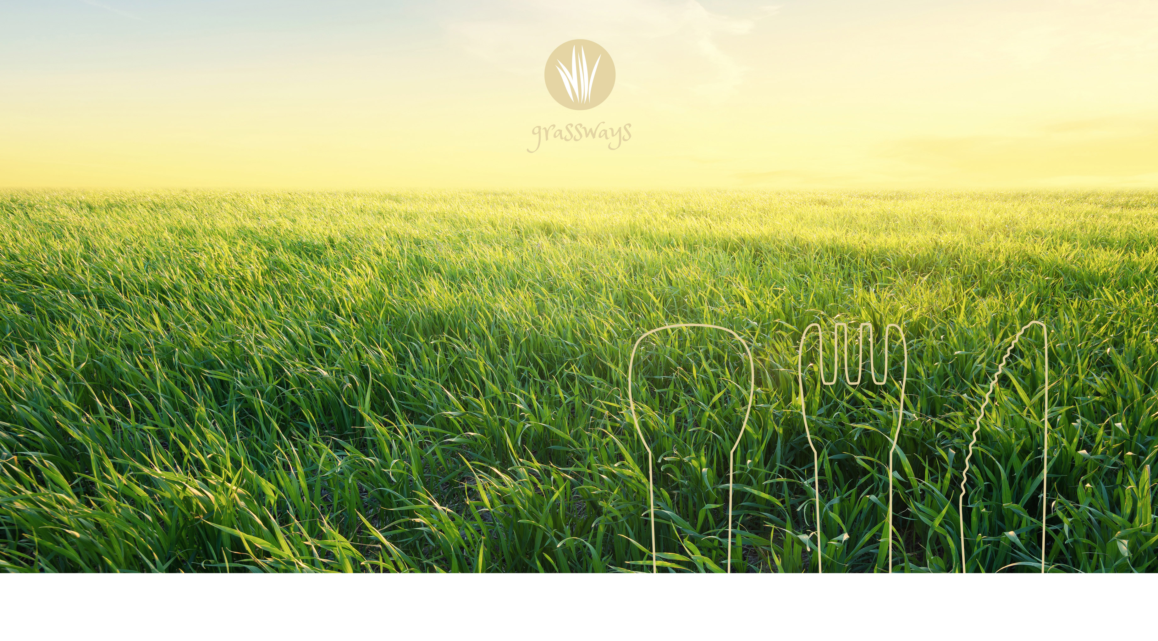 Projekt Corporate Design grassways Referenz